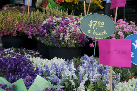 Greenmarket Flowers