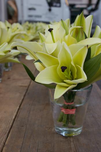 Greenmarket Lily