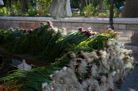 Greenmarket Onions