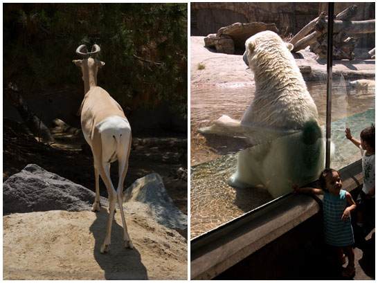 Wordless Wednesday: Aloof Animals at the San Diego Zoo