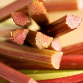 Wordless Wednesday: Rhubarb