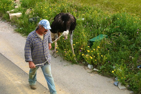 Man and Ostrich