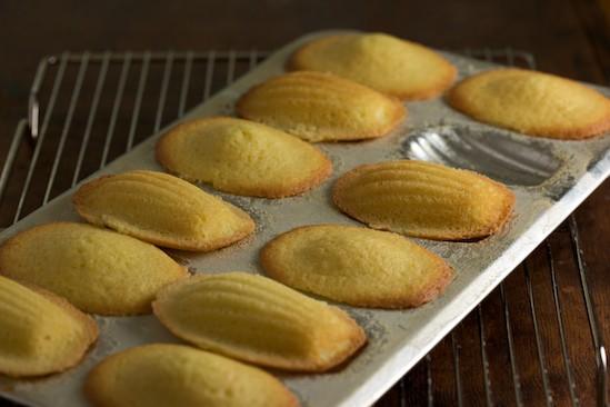 madeleine pan substitute