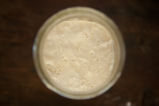 Sourdough Starter Bubbles Day 5 Morning