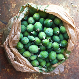 Silent Sunday: Feioja Harvest