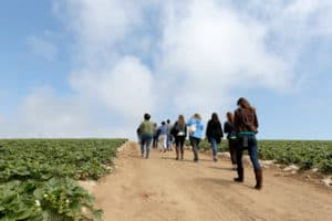 Group walking through the strawberry field