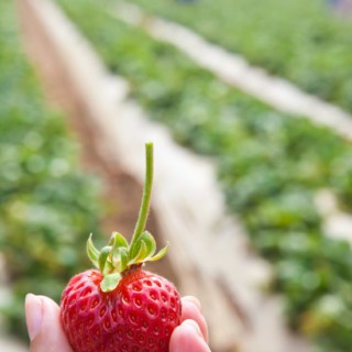 Wordless Wednesday: Searching for the Perfect Strawberry