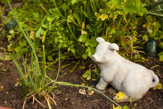 Garden Decor Pig at Pinch My Salt