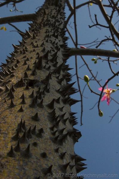 Dangerous Tree
