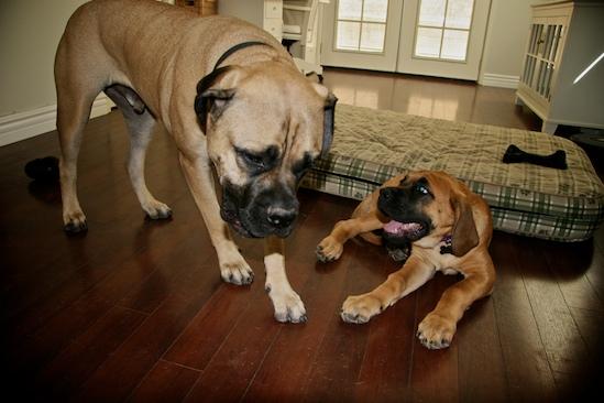 Wilbur and Annie