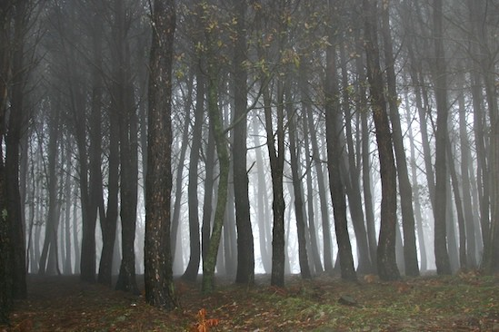 Foggy Trees in Sicily