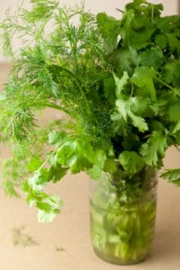 Fresh Dill and Cilantro