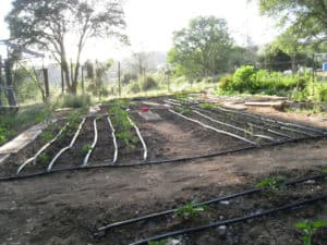 Drip Irrigation in Garden Beds