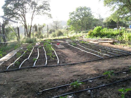 Drip Irrigation in Garden Beds