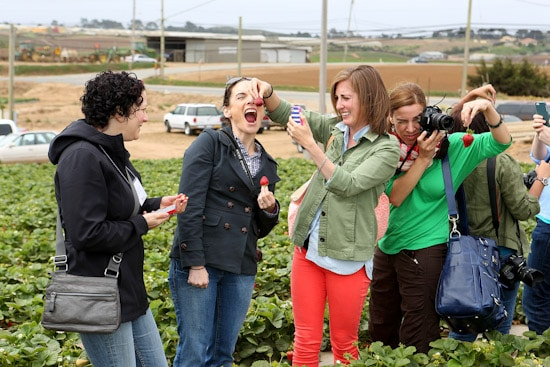 Bloggers in a Berry Field