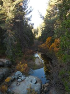 Creek from the Bridge