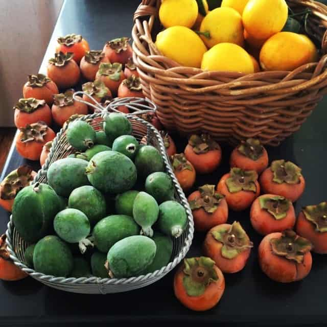 Fall Fruit