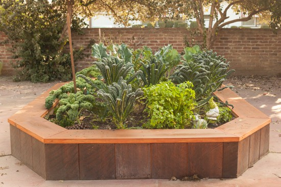 Raised Garden Bed Winter Vegetables at Pinch My Salt