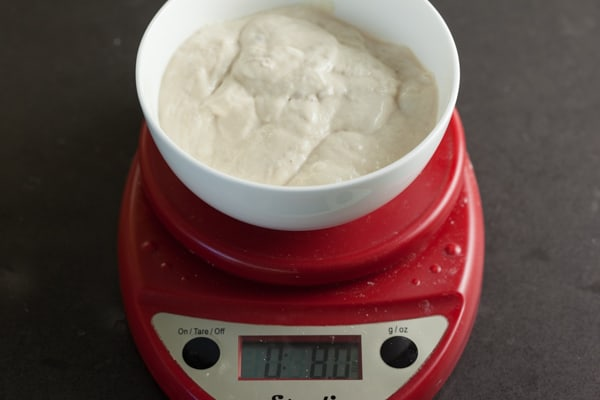 Sourdough Starter for Sourdough Pie Crust | pinchmysalt.com