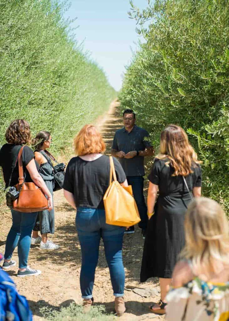 A group tour of an olive orchard